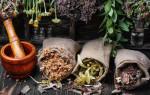 Обзор трав, которые лечат гипотонию — показания и противопоказания, способы применения