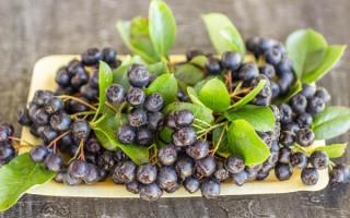 Черноплодка и кровяное давление — повышает или понижает этот плод оное, рецепты и видео