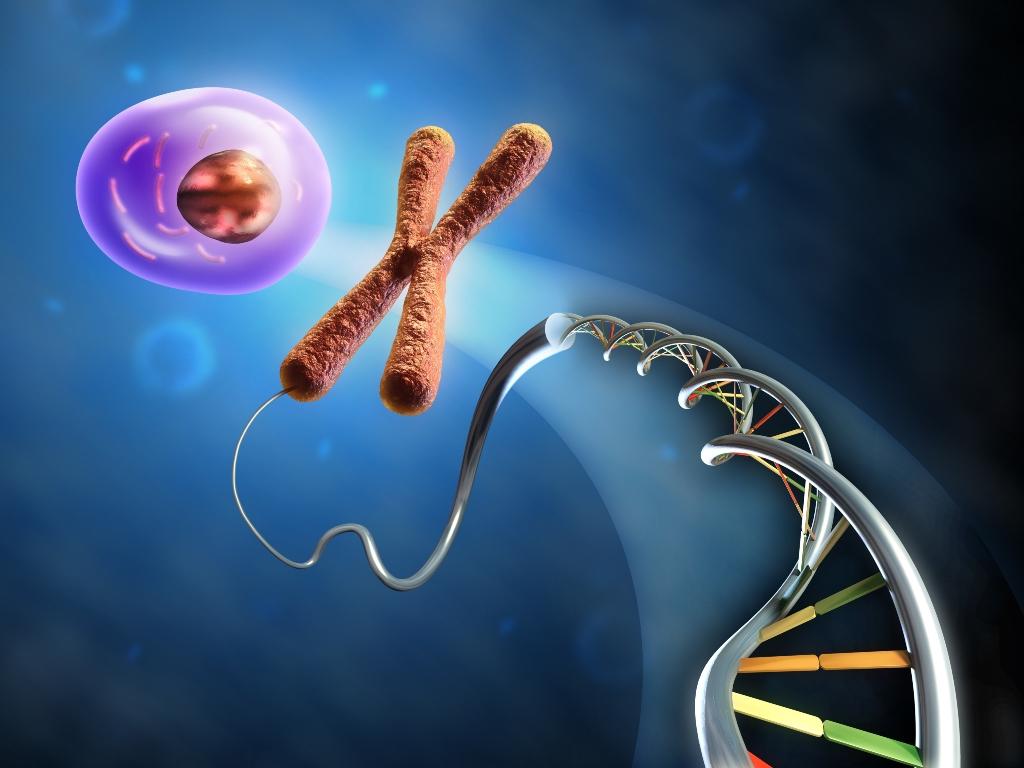 днк и хромосома