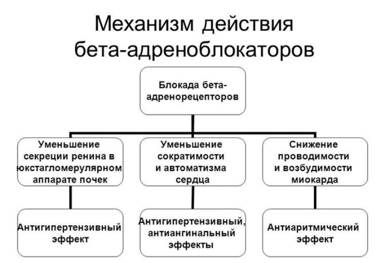 механизм действия бета-адреноблокаторов