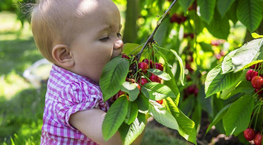ребенок и вишня
