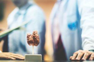макет щитовидной железы